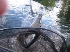 alaska-fishing-024