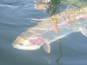 alaska-fishing-029